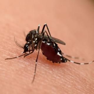 0610 West Nile Virus TN
