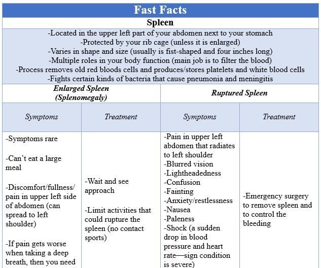 Fast Facts Spleen