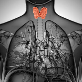0115   Thyroid TN