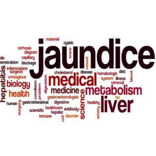 0514 Jaundice TN