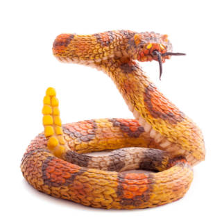 0611 Snake TN