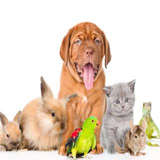 0107 Pets TN