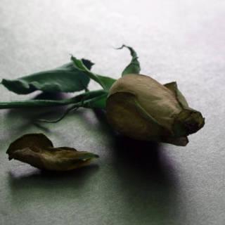 Suicide Prevalence