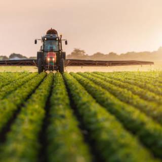Pesticides & Food